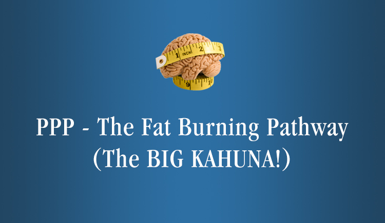 ppp-fat-burning-pathway