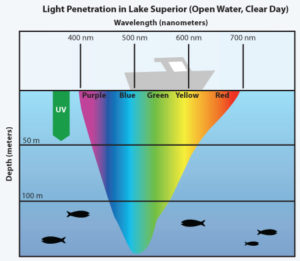 Note that blue light penetrates deeply into the photic zone in sea water to affect marine photoreceptors and mitochondria.